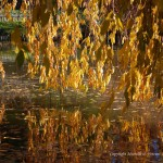 Fall Reflections