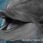 SmilingDolphin