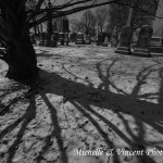 Snowy Shadows 1