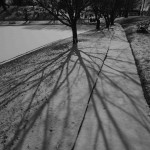 Snowy Shadows 2